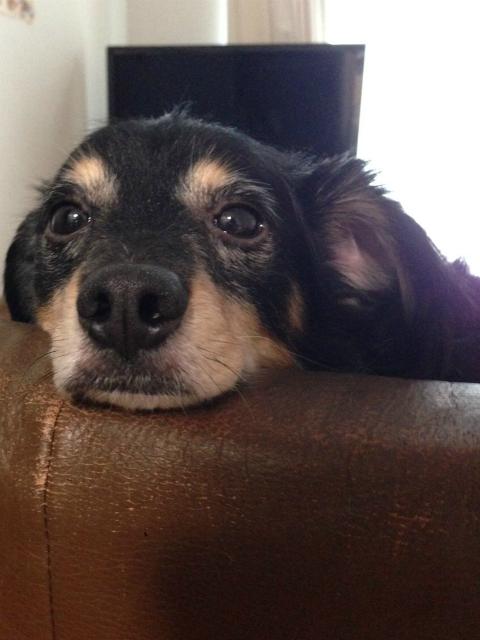 ビッグアームの愛犬